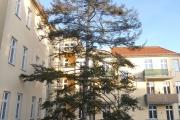 Obj.-Nr. 15191204 - Balkon-Ausblick Baum